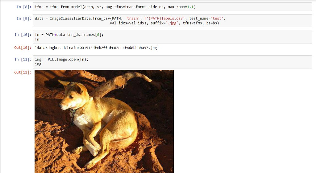 Getting started with AI — Determining a dog's breed from an image