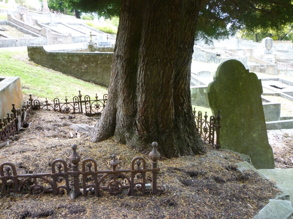 A large tree is growing from a grave, the fence has been broken and a tombstone is displaced leaning on an angle.