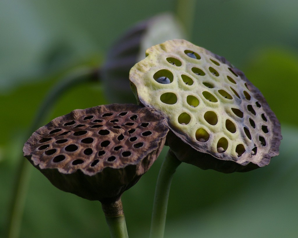 Trypophobia is a fear of holes you probably have it omgfacts wikimedia commons izmirmasajfo