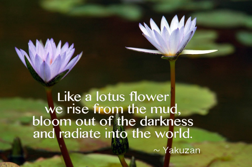 Like a lotus flower we rise annie yakuzan loyd medium the lotus flower a beautiful flower found all over the world the start of this flowers life is so similar to my one and maybe yours as well mightylinksfo