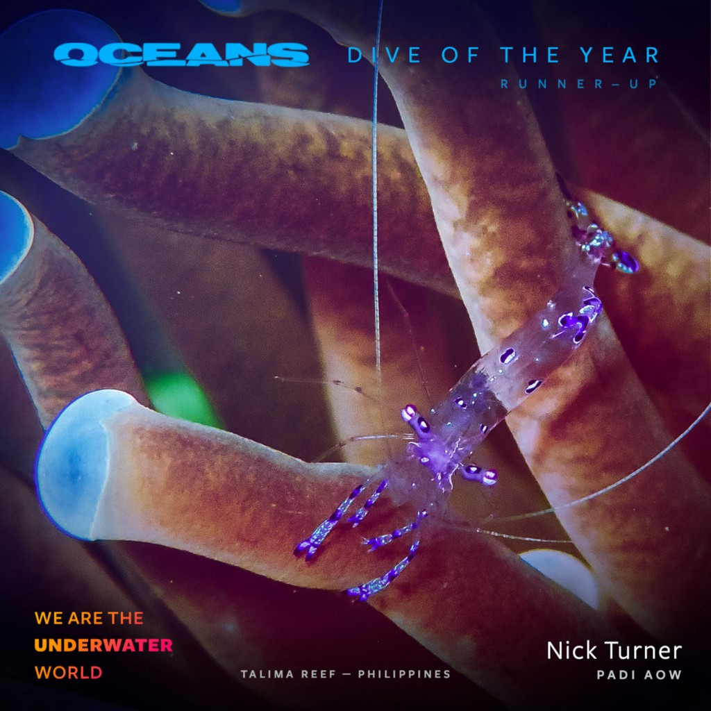 1*8owEdjHvUgzaqqSKVIOkhw Dive of the Year Awards 2018 presented by Fabien Cousteau