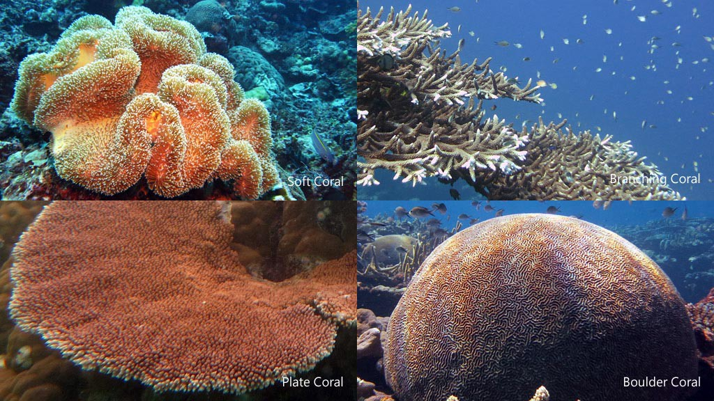 Snorkelling leap academy medium i also observed four different types of coral boulder branching plate and soft look at the photo below for reference publicscrutiny Images
