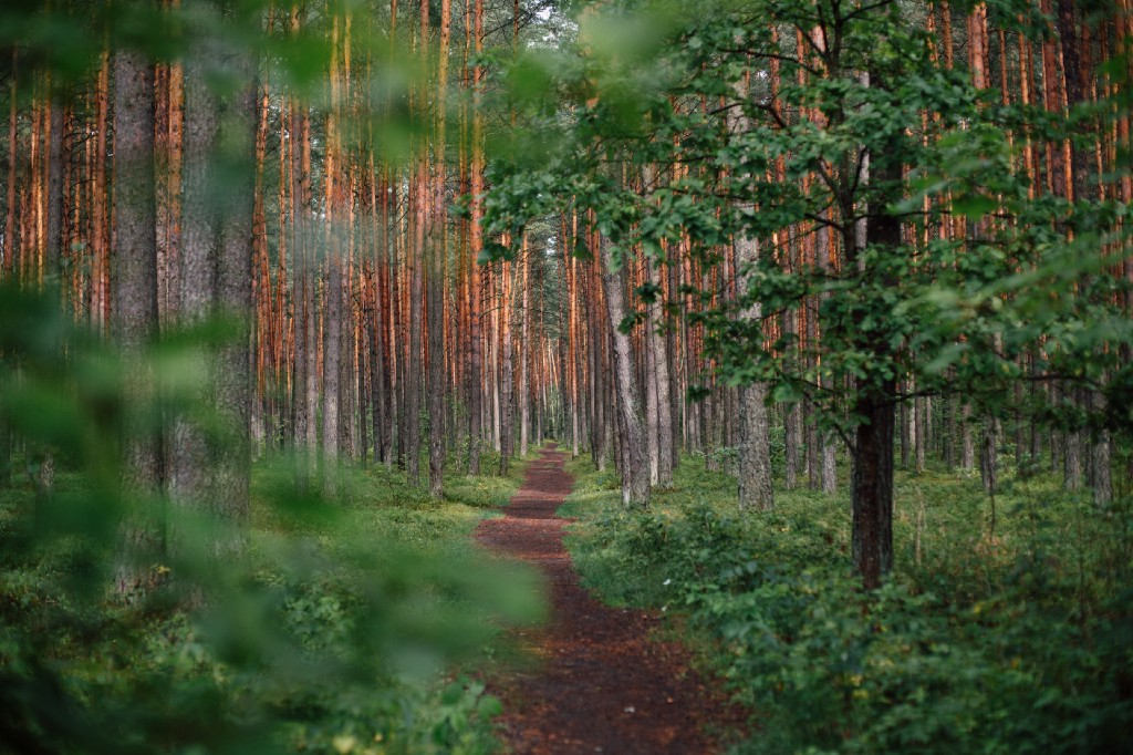 Setting Up a Logging Infrastructure in Nodejs