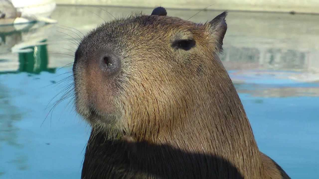 Feature Test with Headless Chrome and Capybara