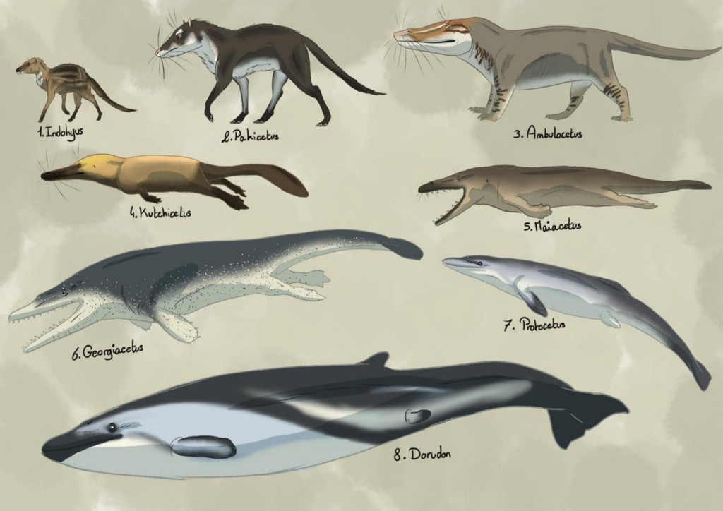 Images of many of the whale  ancestors