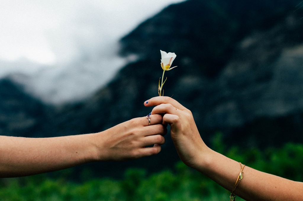 Two hands passing a single flower to each other.