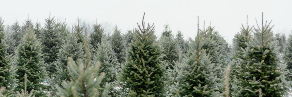 The Decider: Christmas Trees