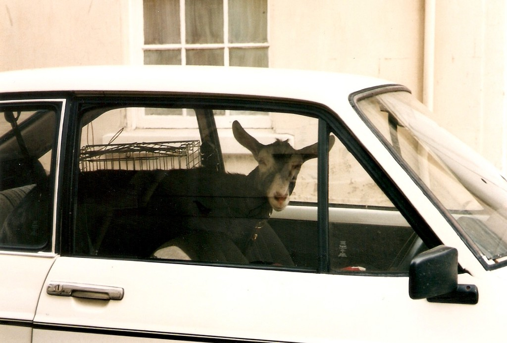 Two Goats, a Car, and the Beauty of Mathematics