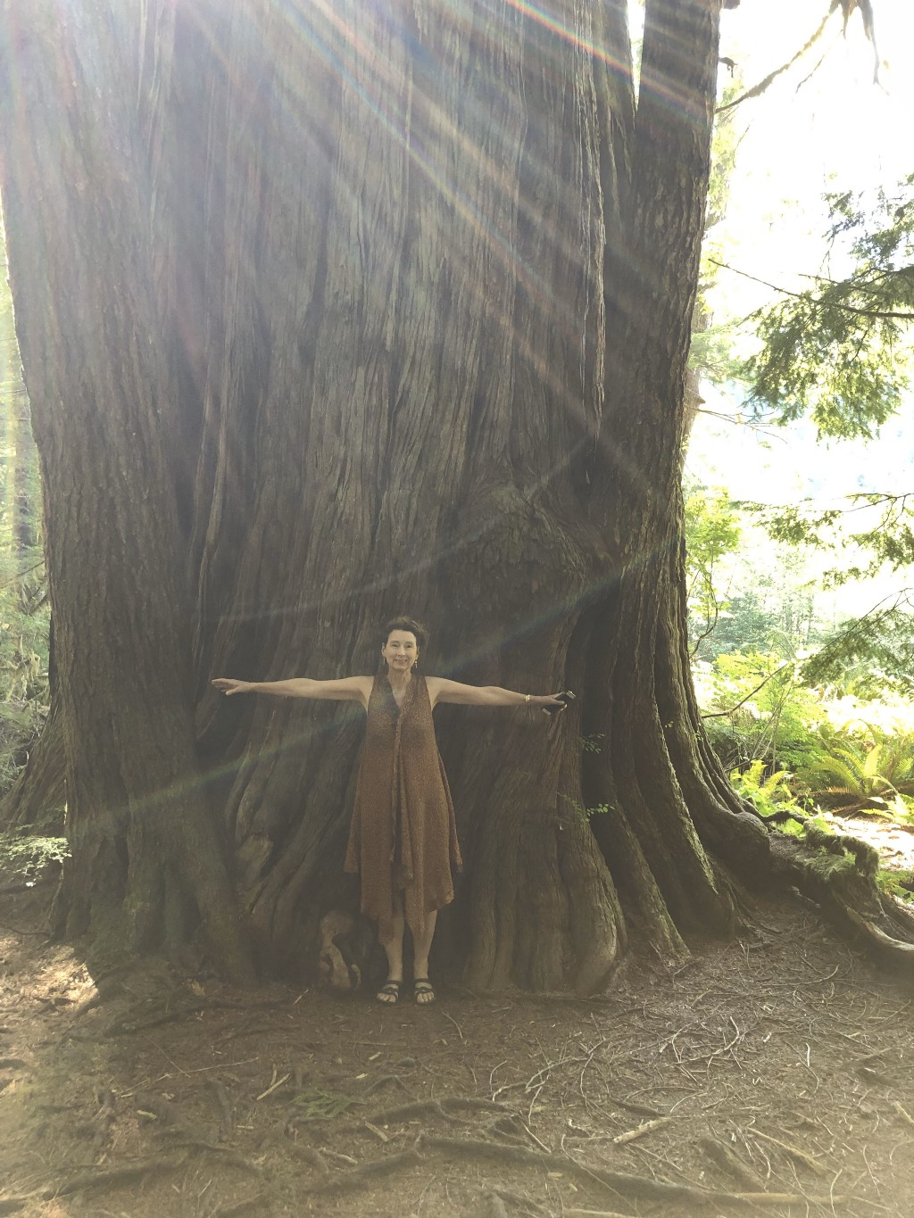 The lower trunk of an ancient cedar; the width of which is twice the outstretched arm spans of the author standing before it.