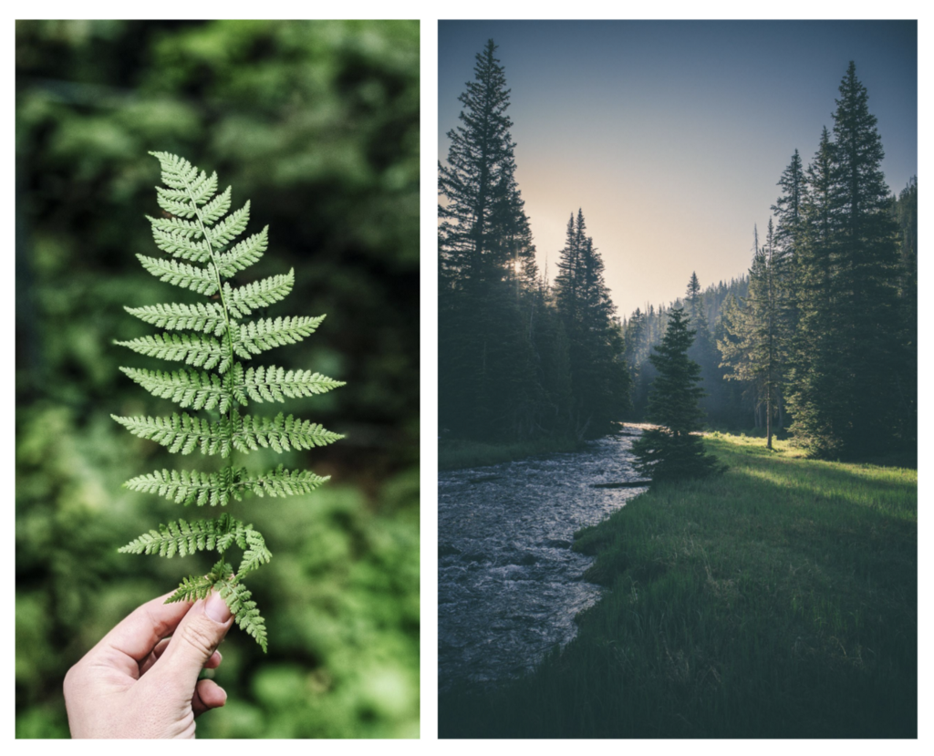 Two pictures side by side: a close-up of a leaf, and a forest by a stream