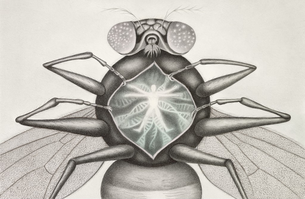 The Tiny Fruit Fly Is a Giant of Scientific Research