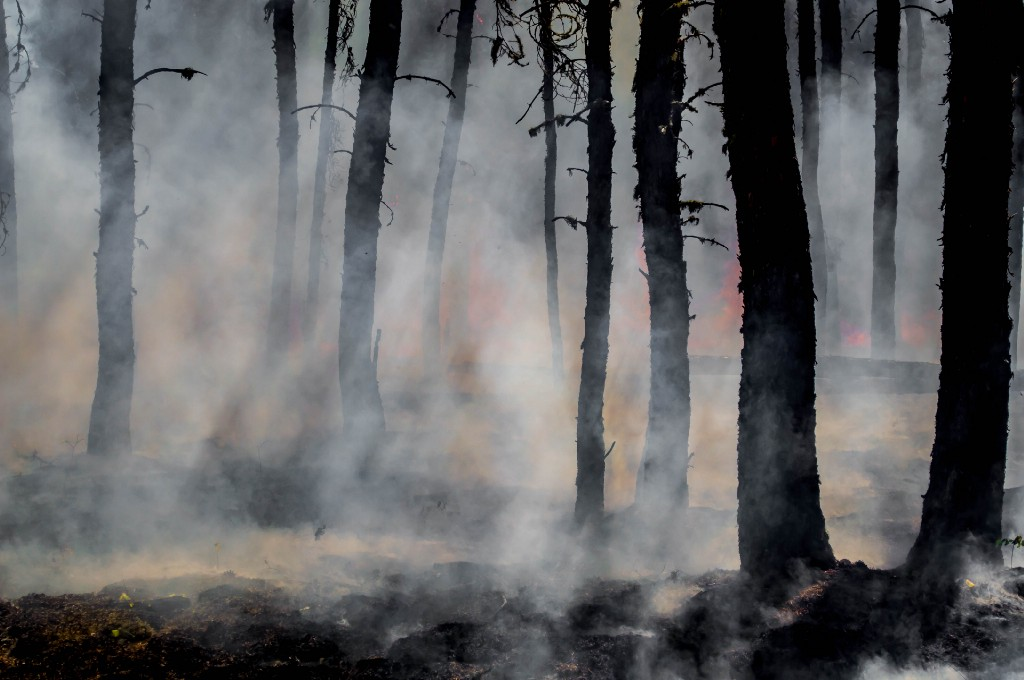 Burned trees and smoke after a forest fire