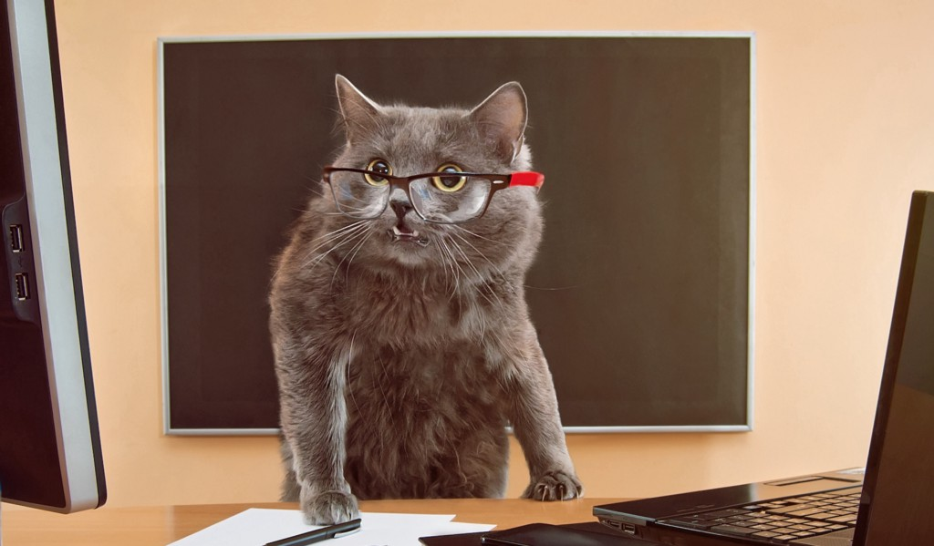 Close-up of a flustered looking cat wearing glasses and standing at a desk with pen, paper and a laptop