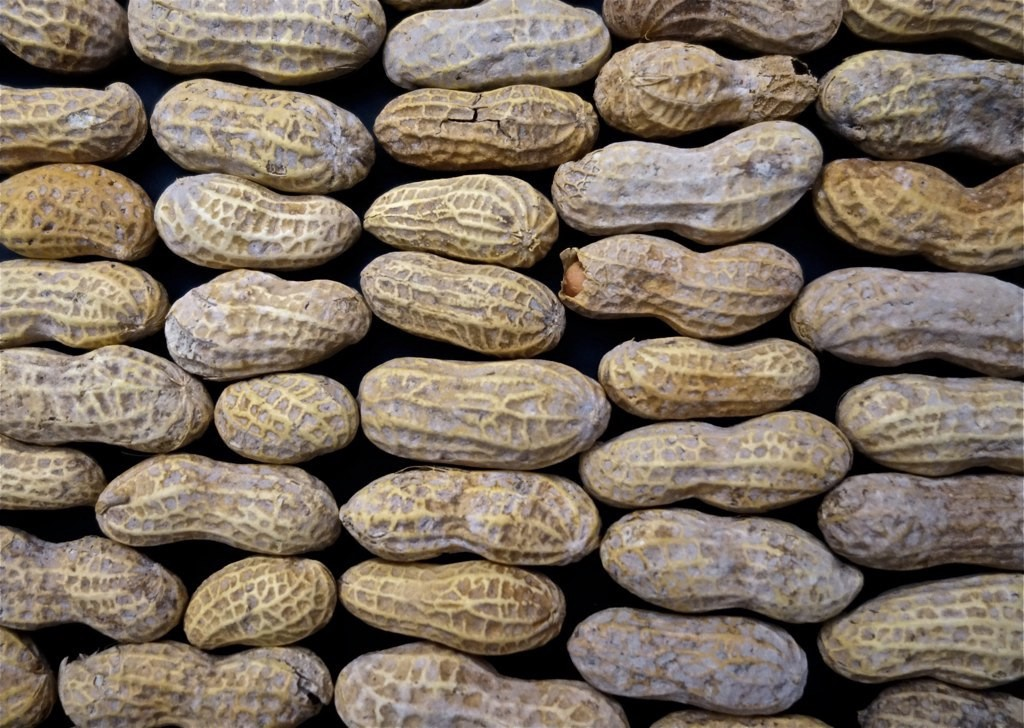 Were beginning to understand the recipe for food allergies the were beginning to understand the recipe for food allergies the five best ideas of the day april 9 2018 forumfinder Gallery