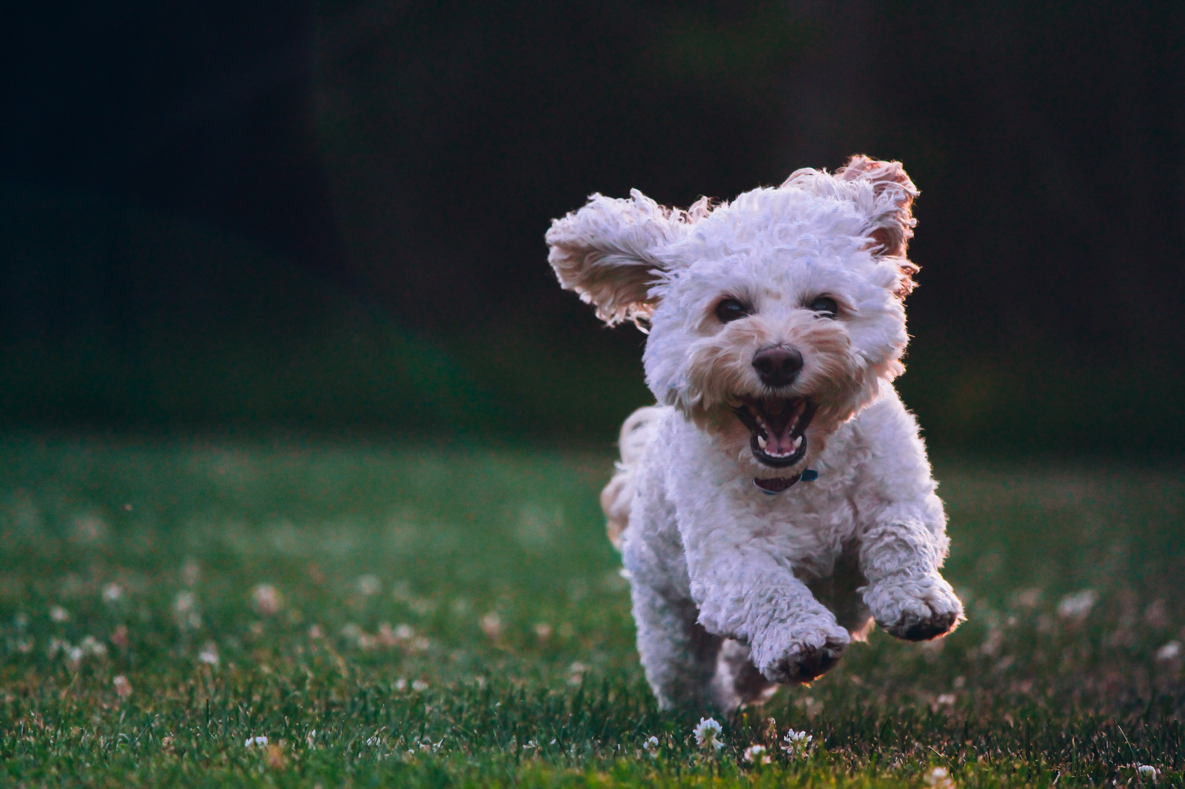 Build Your First Computer Vision Project—Dog Breed Classification