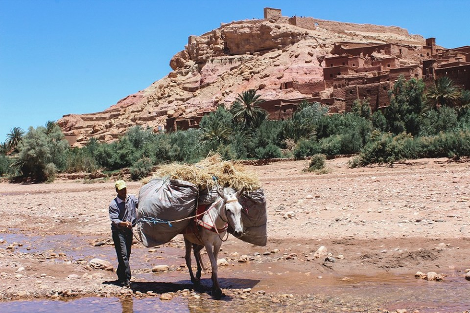 slow travel: Man with horse hauling grain, Morocco