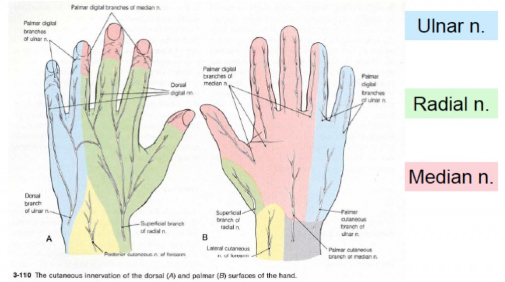 Common Causes Of Hand Numbness And Tingling Alex Newton Medium