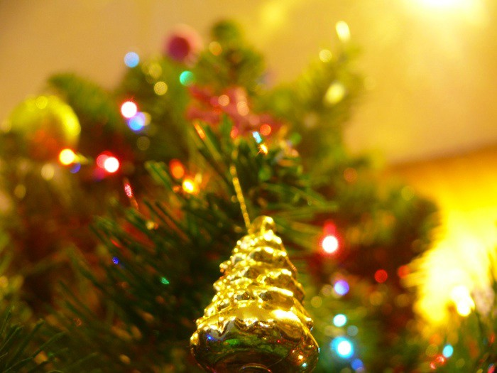 where to buy a christmas tree by neighborhood in san francisco the bold italic san francisco - Where To Buy Christmas Tree