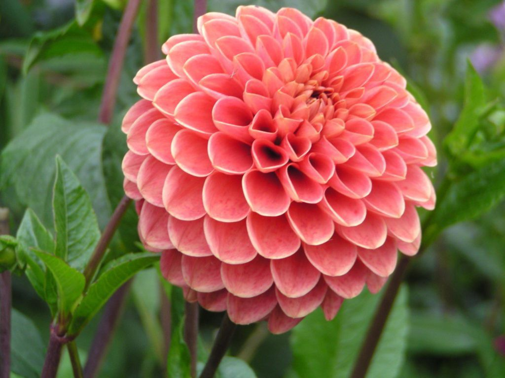 Top 20 Most Beautiful Flowers in the World |Most Magnificent Flowers