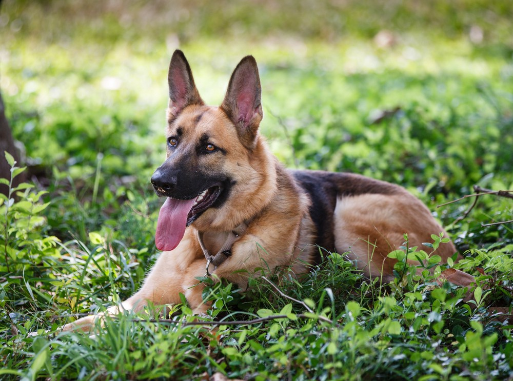 Texas Cop Shoots His Neighbor's Dog, Gets Away With It ...