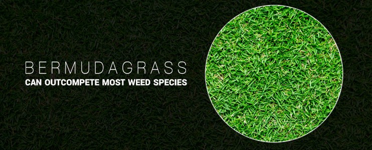 Different Types Of Weed