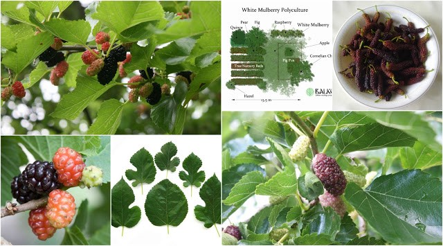 a136de4ca8da Mo  Mulberry — The Essential Guide to all you need to know about ...