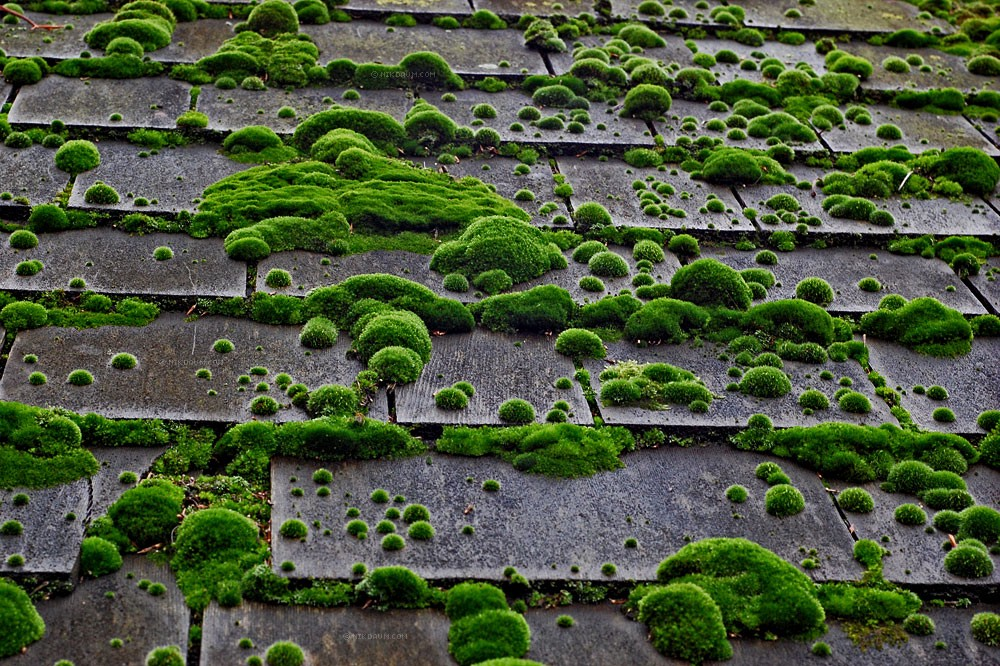 How To Remove Moss From Your Roof Sara Thompson Medium