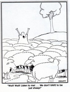 cartoon_more_than_sheep_c