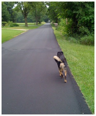 Rufus finds a new path
