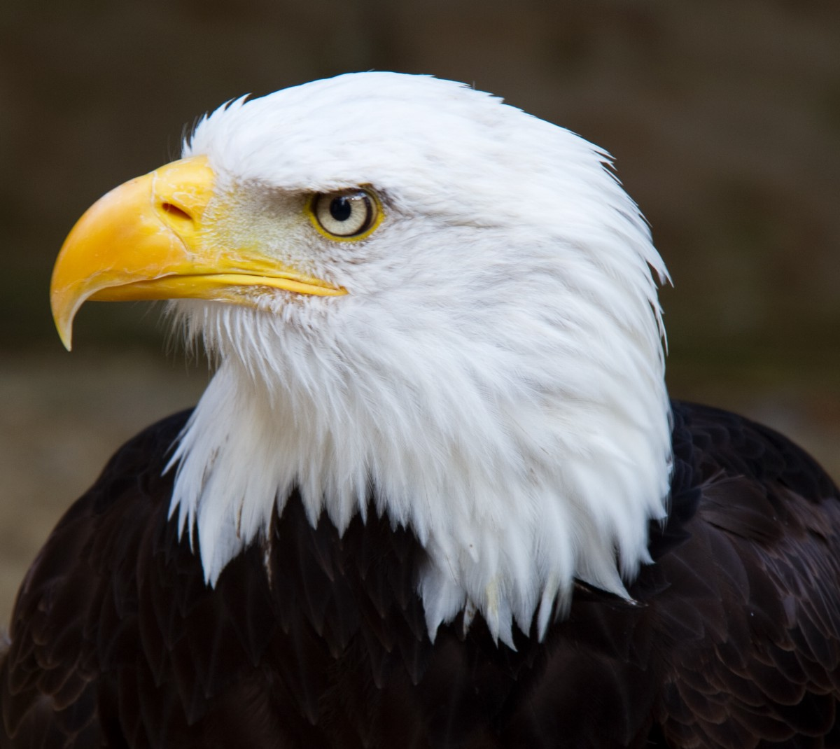 Seven Leadership Principles To Learn From An Eagle – Enam Kumi – Medium