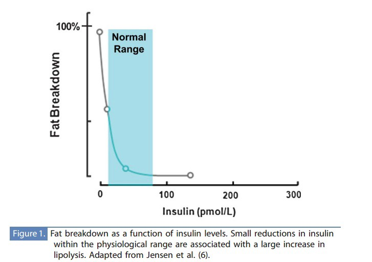 This Is Where Intermittent Fasting Comes In As One Of Its Effects To Lower Insulin Levels And Thus Increase Lipolysis The Question How Long Do You