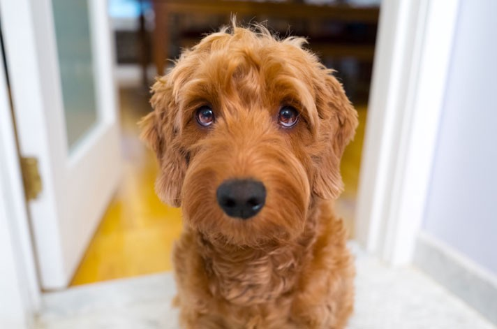 Puppy Dog Eyes For The Smartphone Generation The Startup Medium