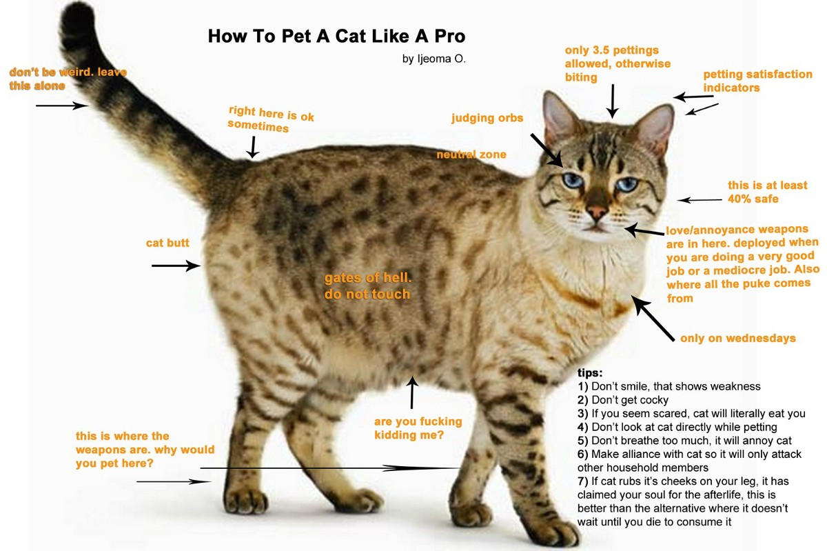 How To Pet A Cat Diagram