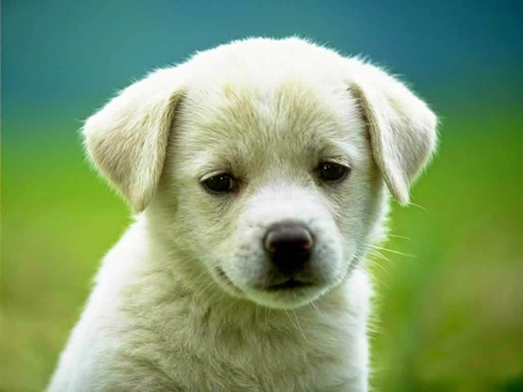 5 characteristics we should learn from dogs ace green medium