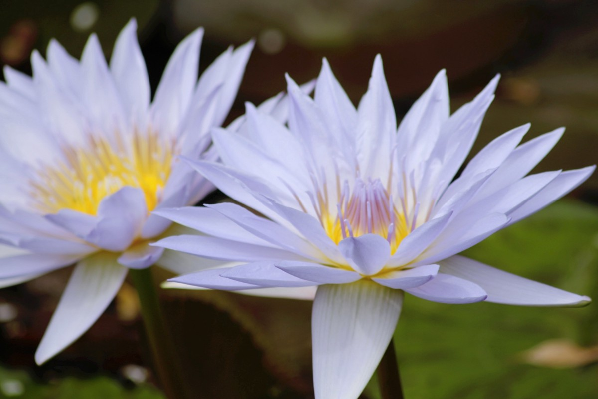 Birds in a busy city param aggarwal medium the lotus the national flower of india and off for a jog now izmirmasajfo