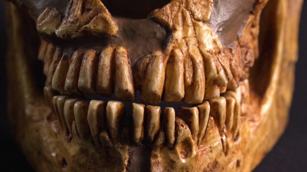 What Can Teeth Tell Us About Early Humans   U2013 Science Friday Spoonfuls  U2013 Medium