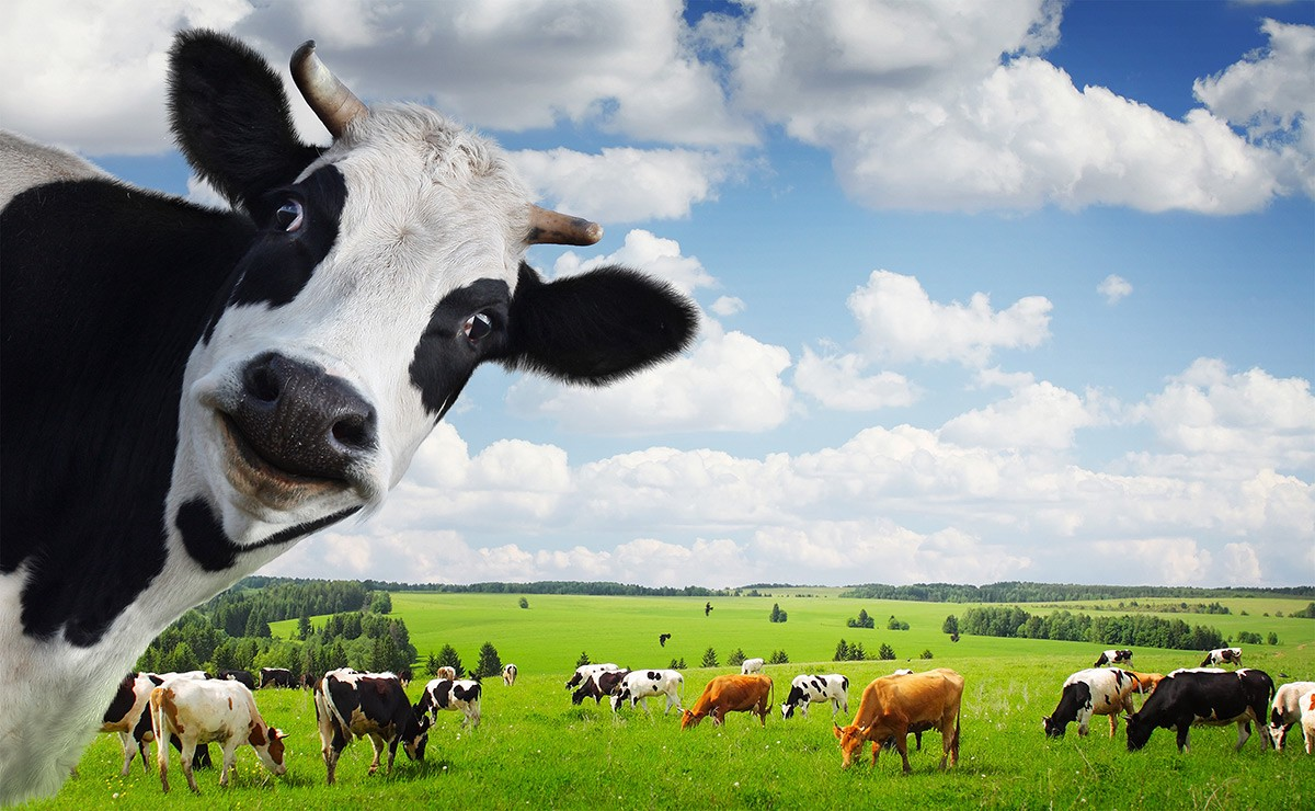 pets and cattle infrastructure for software as a service saas