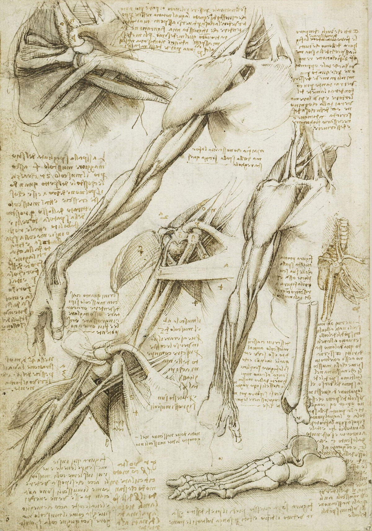 The Nature of the Human Body – Leonardo da Vinci – Medium