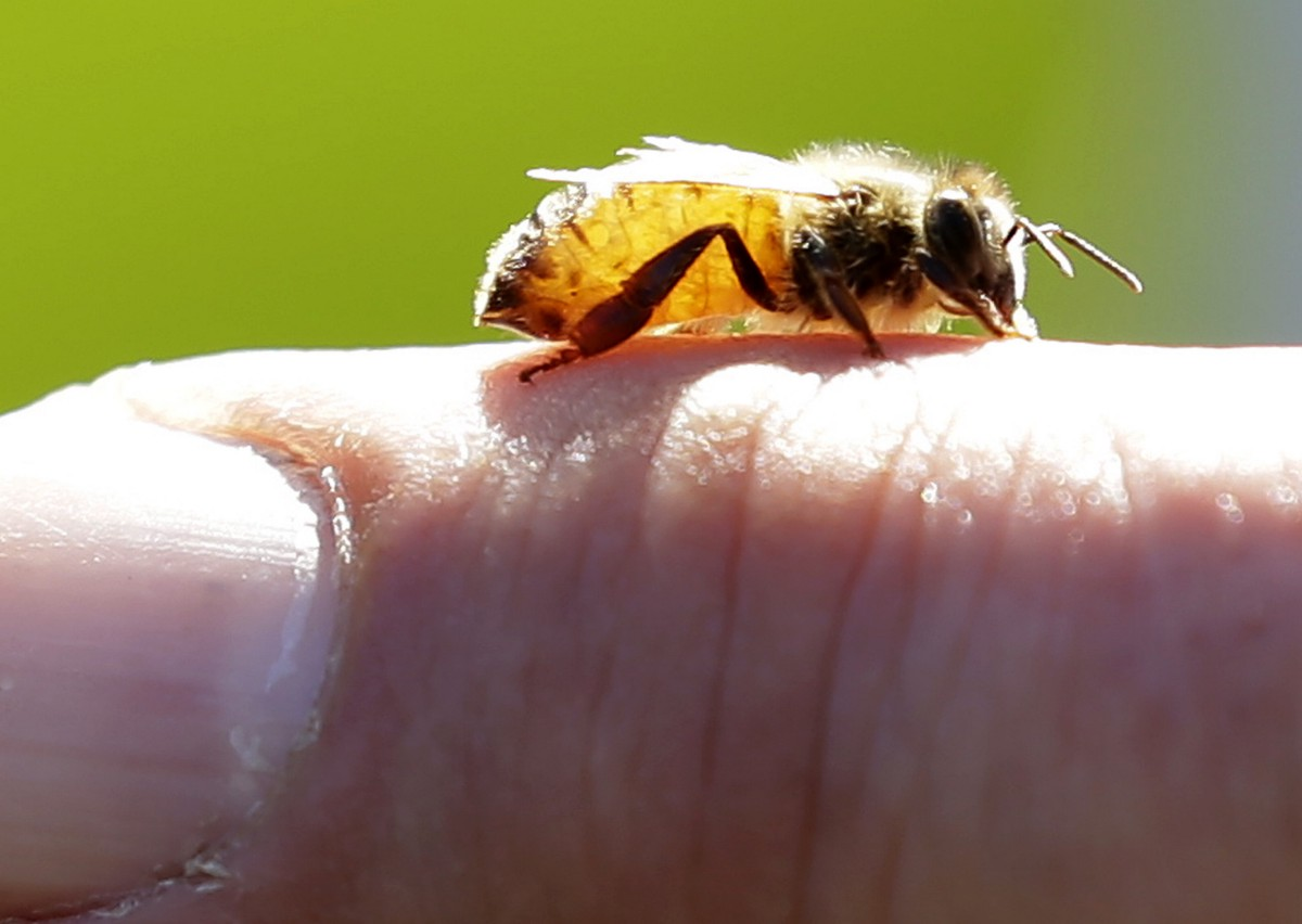 Hawaii bees added to the endangered species list