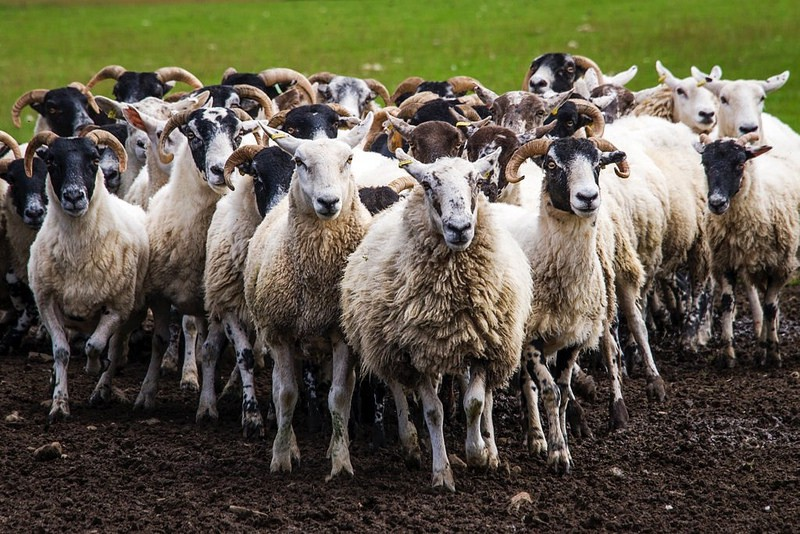 understanding the herd mentality of vcs and how not to let it psyche