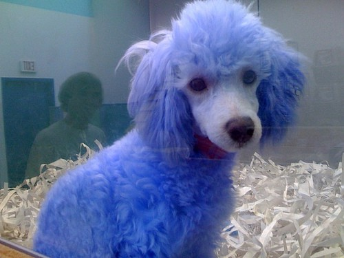 i know why the dog is blue � the shocker � medium