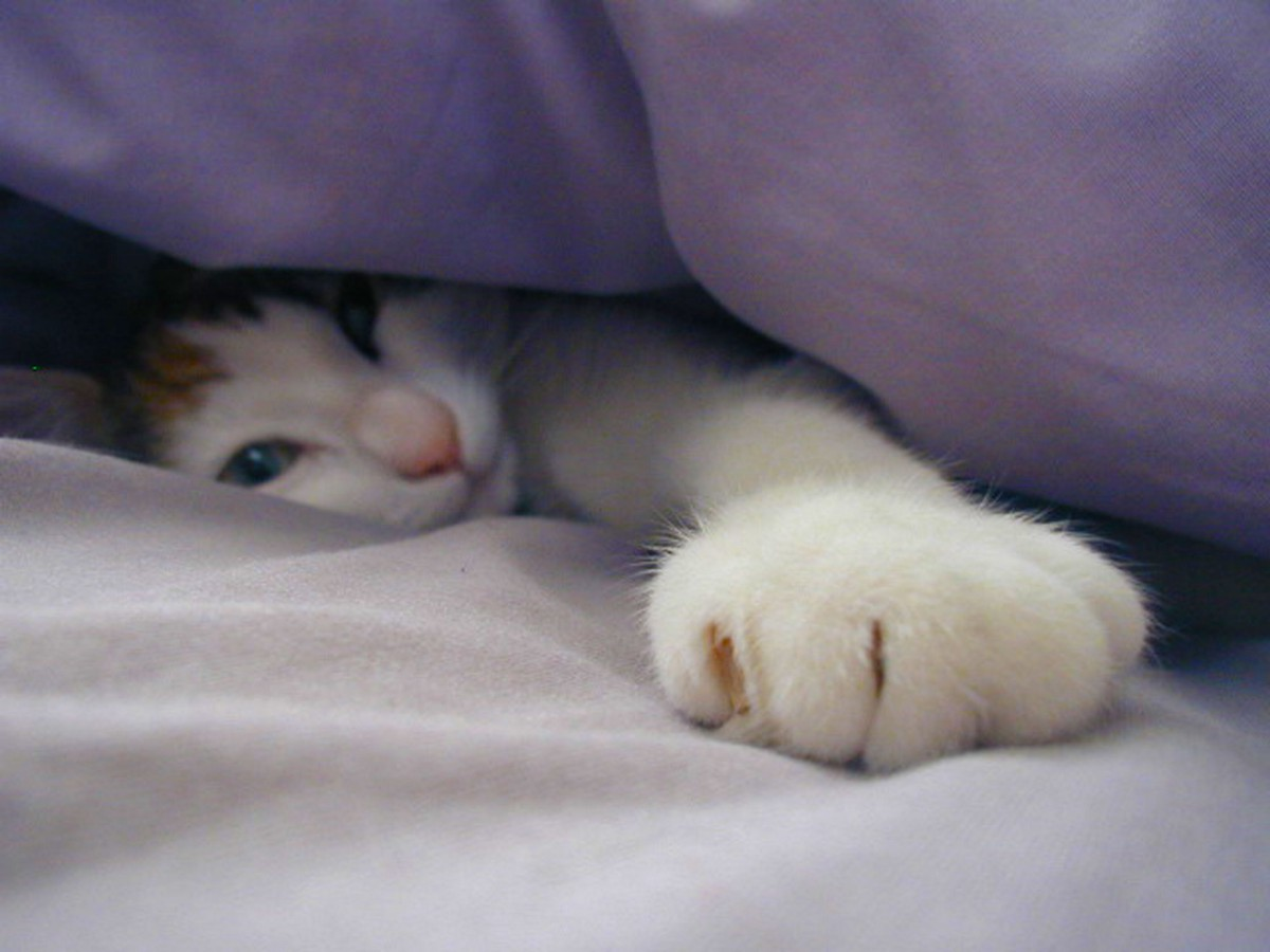 7 Easily Missed Signs that Your Cat Might be Sick – Fit Yourself Club