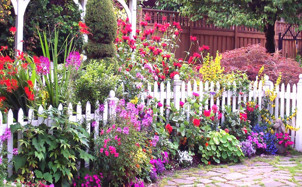 An Online Plant Nursery In Faridabad Offers A Complete Basic Guide Of Do S And Don Ts Through There Blog Even Send Human Istance When Asked
