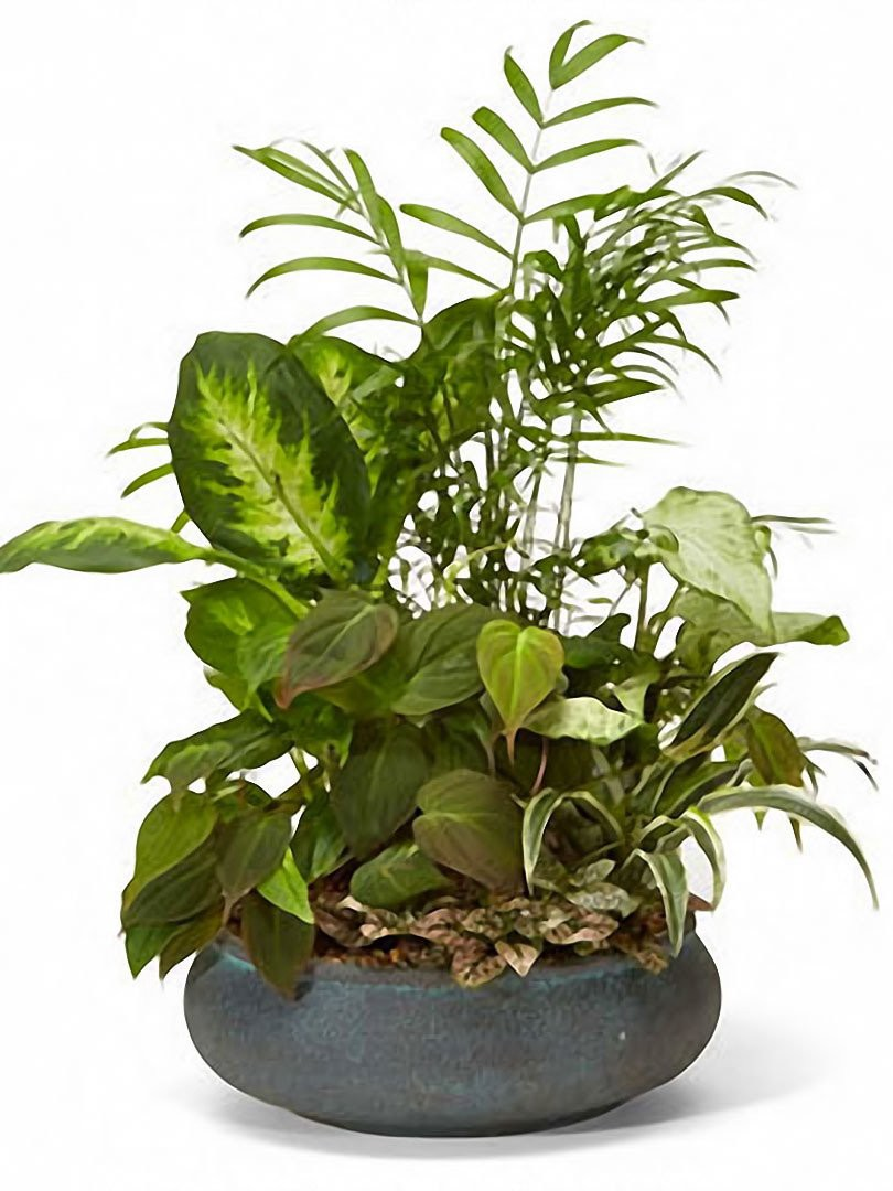 Buy Beautiful Plants Online At Affordable Prices Seasons Minot