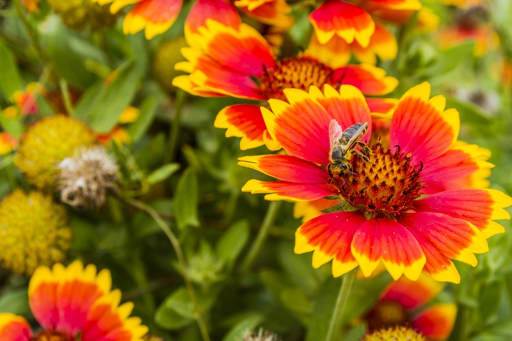 Add perennial flowers for a wonderfully colourful summer garden they beautify your garden from one year to the next according to kelly norris there are at least seven perennial flowers which will brighten your garden mightylinksfo