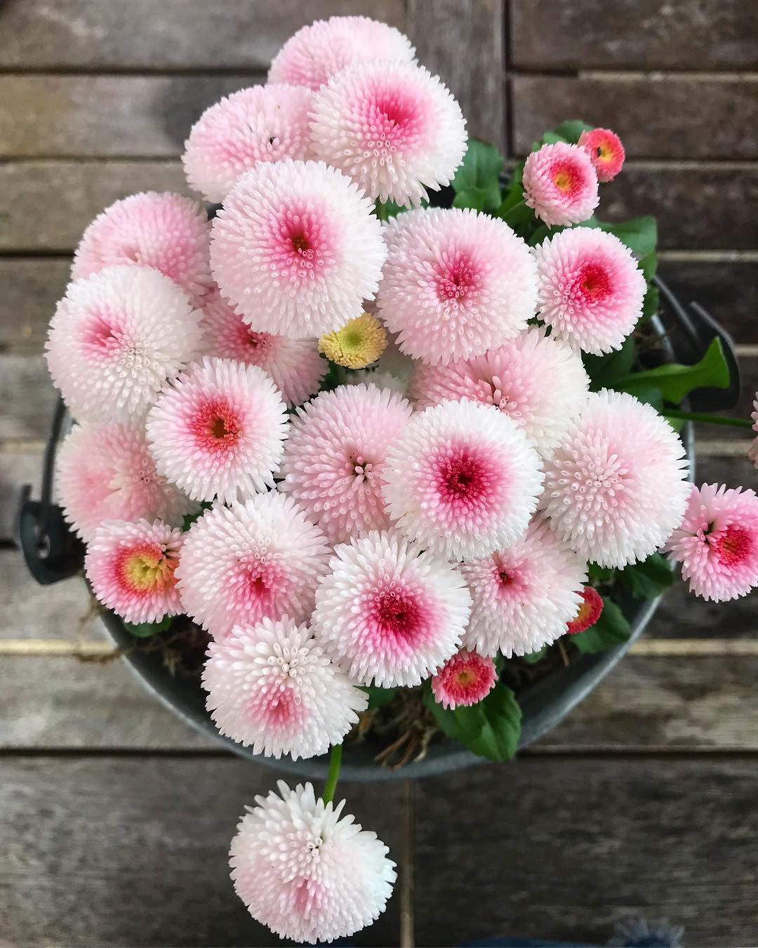 The Most Beautiful Flowers In The World With The Names And Pictures