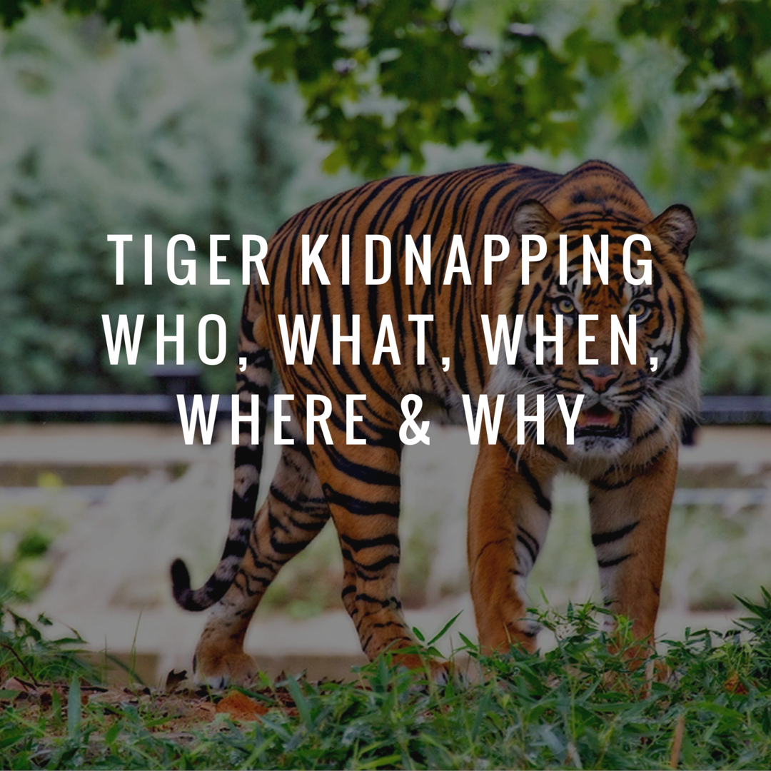 Tiger Kidnapping. Who, What, When, Where & Why?