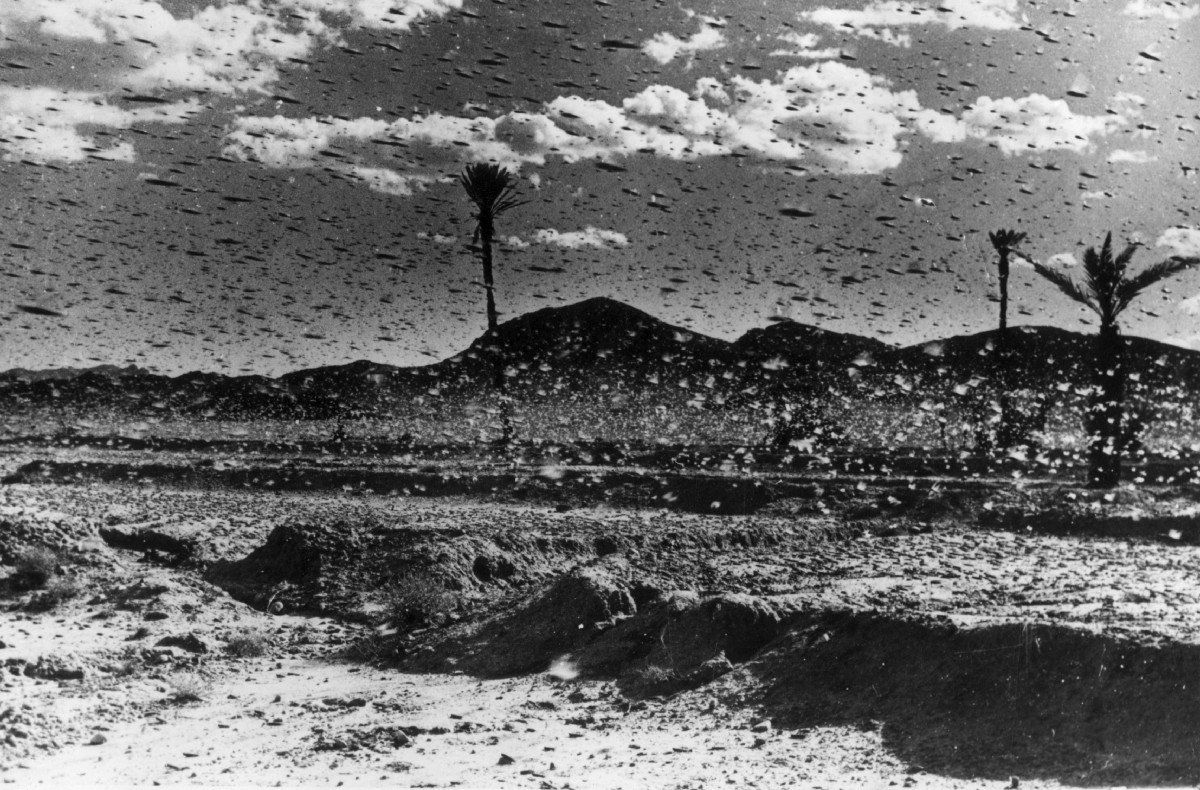 In one year, 12 trillion locusts devastated the Great ...