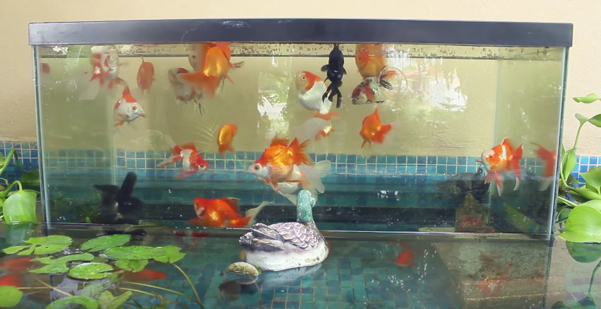 The world turned upside down the awl for Inverted fish tank