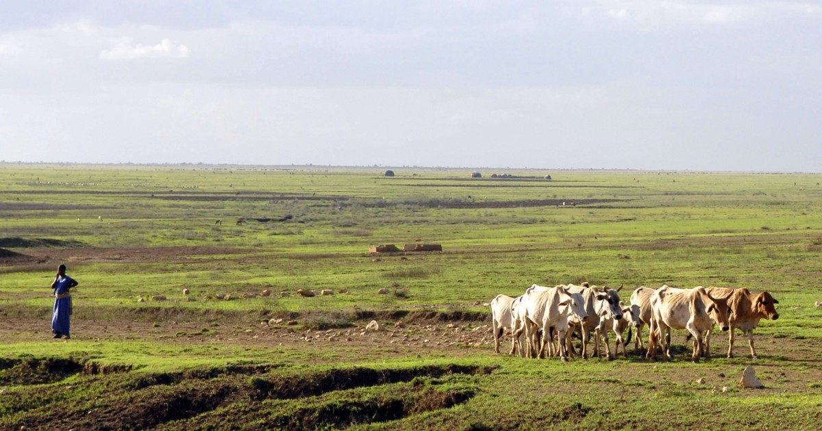 livestock or livelihood Livestock and livelihoods smallholder production remains the predominant enterprise model in global agriculture, largely because of the large number of household.
